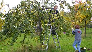 hed_obst_090818_1